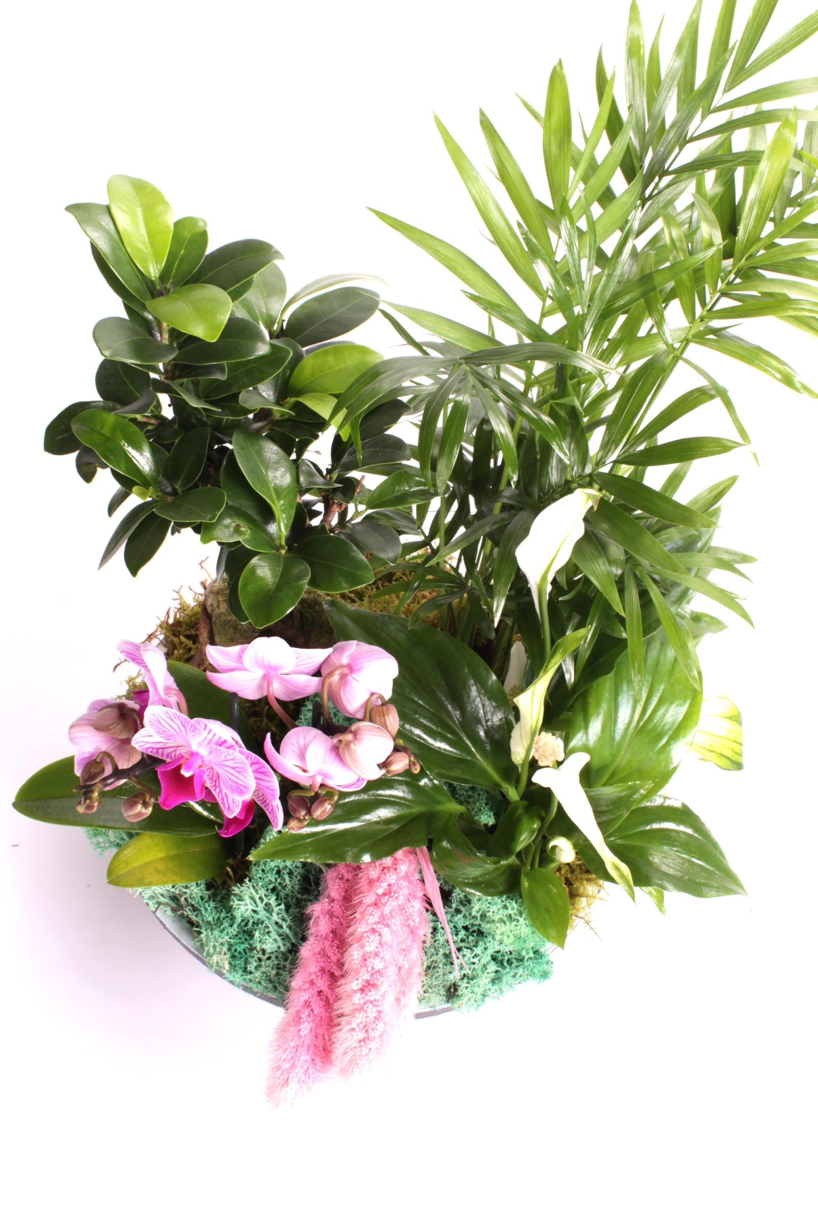 Tropical Gift Teraryum