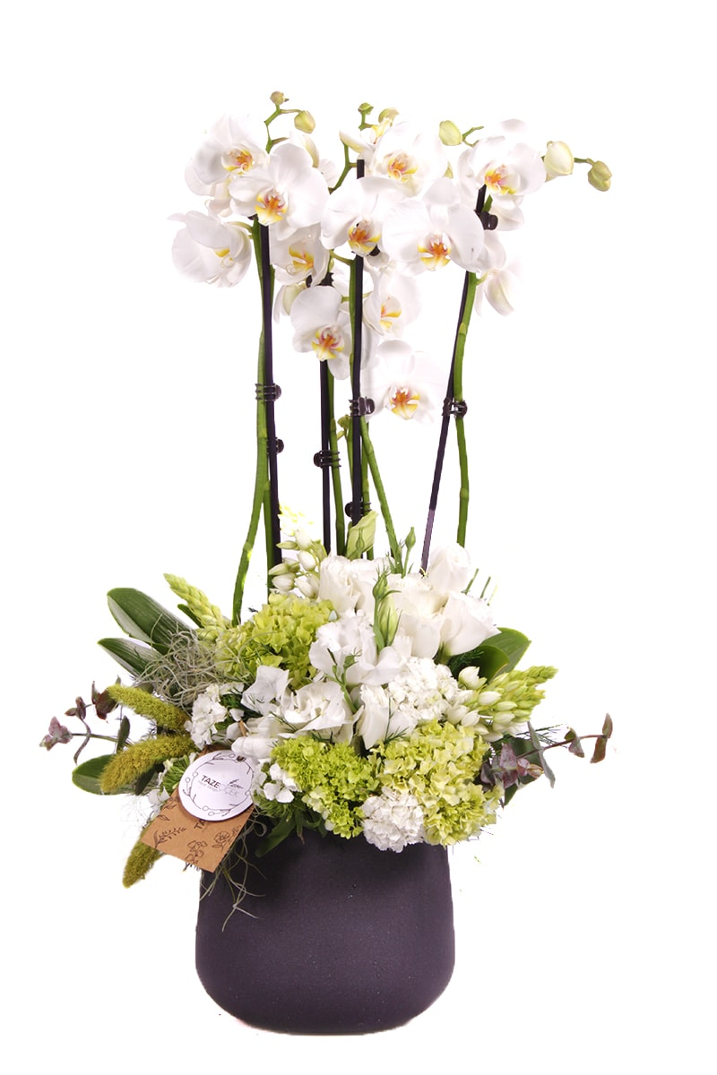 Blessing Orchid Arrangement