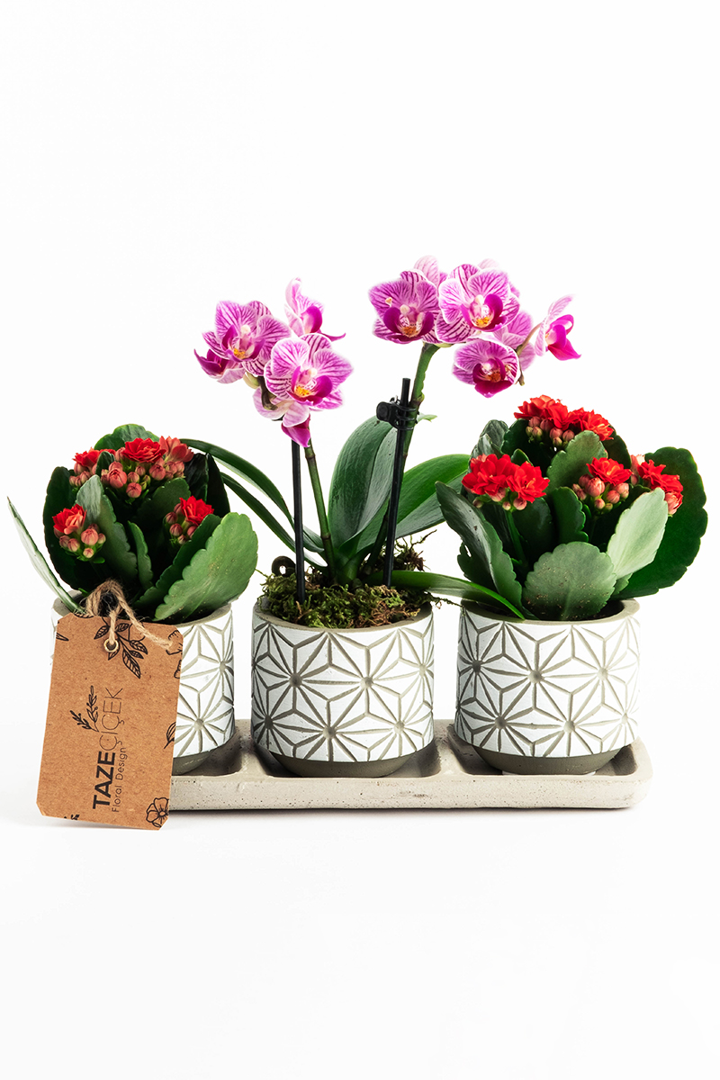Decorative Pot with Purple Orchid