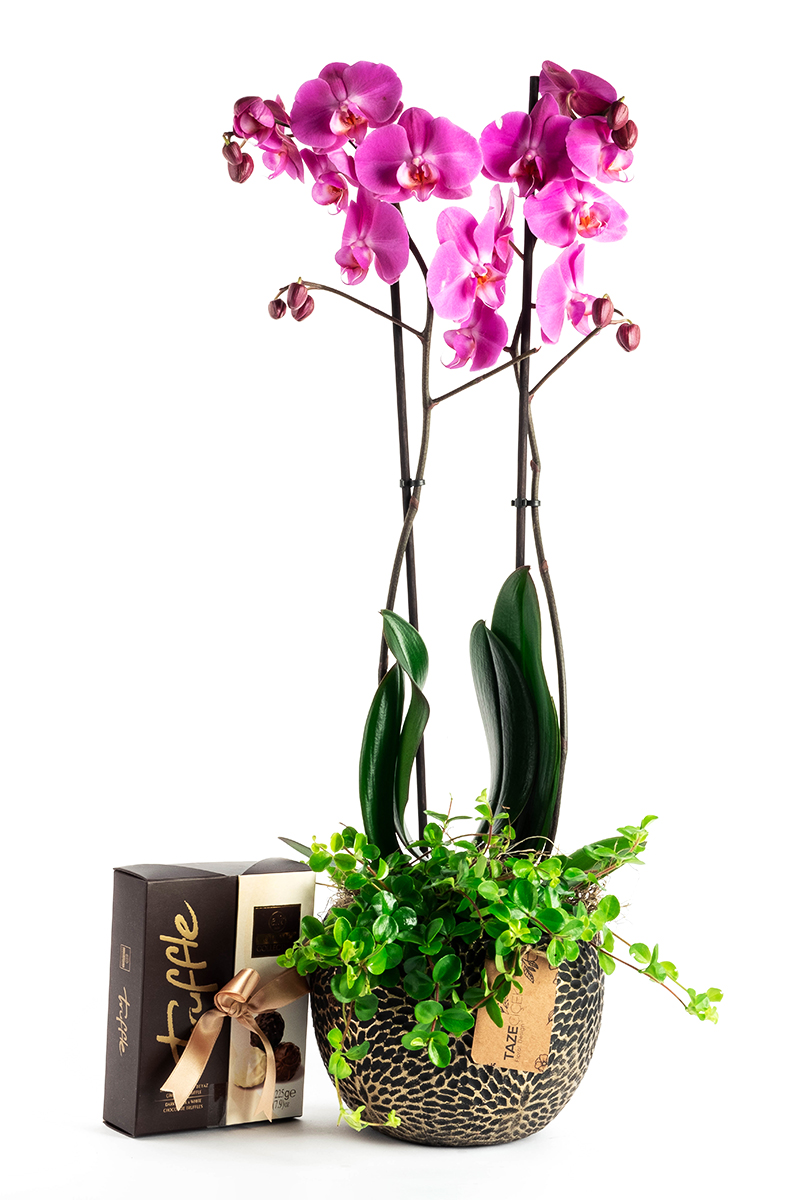 Purple Orchid with Delicous Chocolate